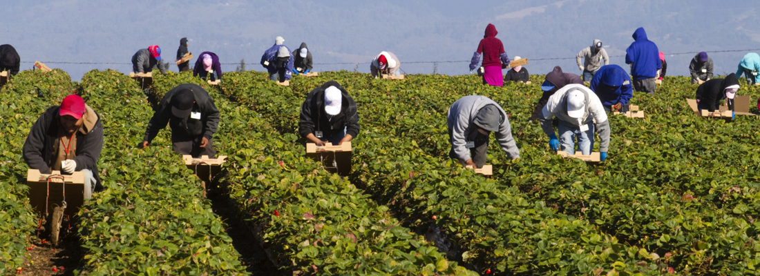 Predicting The Future of Migrant Labour Programs… In the 60s and 70s