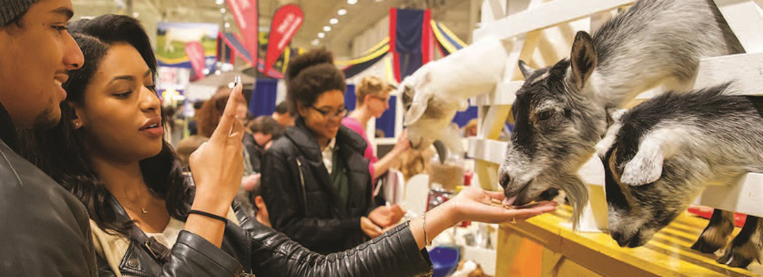 Union urges public high school teachers to avoid Royal Winter Fair amid lockout
